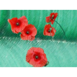 Coquelicots rouge