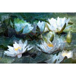 Painting Lotus Flowers